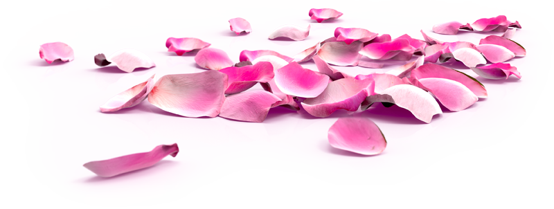 rose_petals_web.png